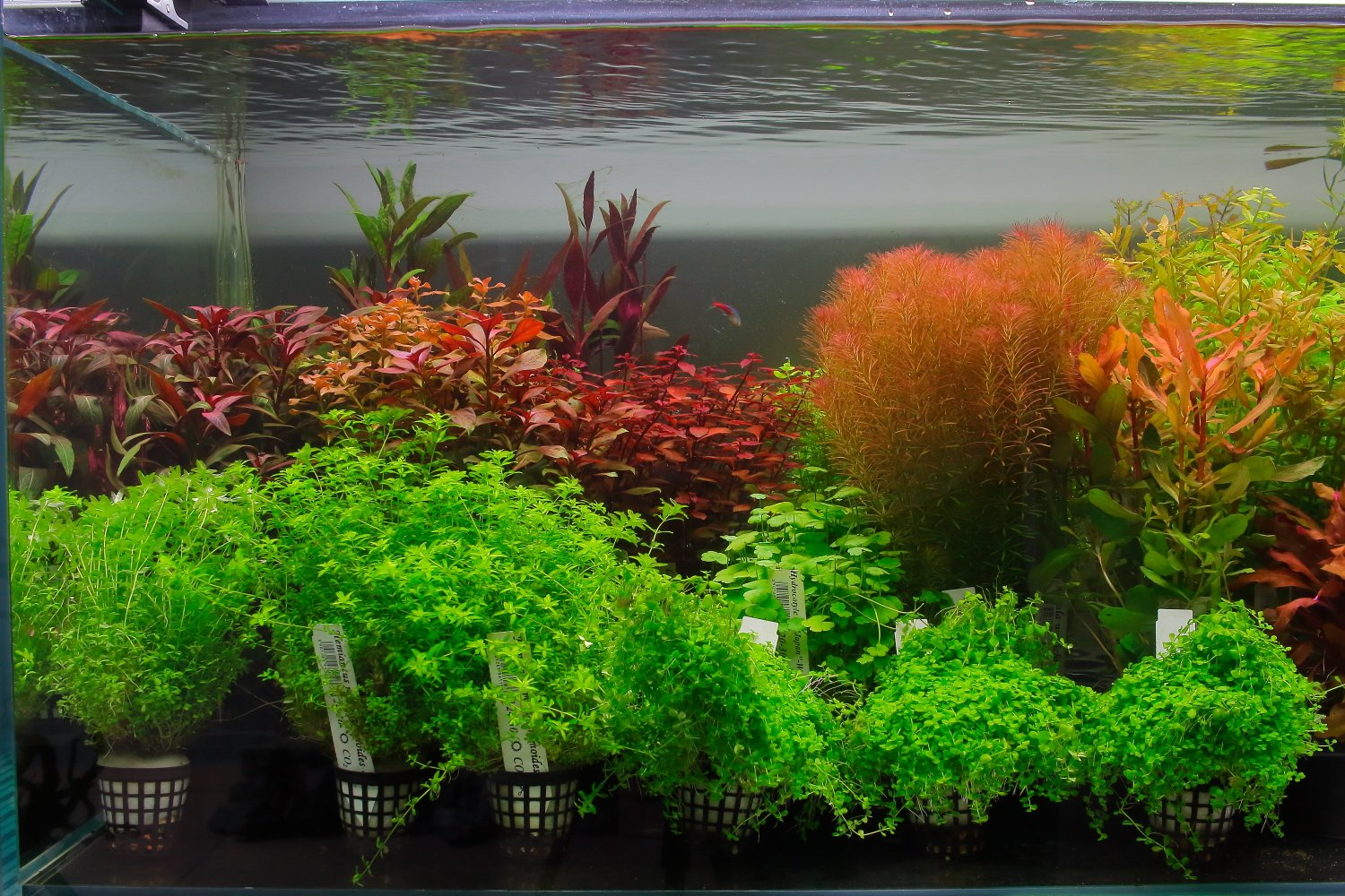 Item A gift certificate for the purchase and selection of plants for aquarium $ 500