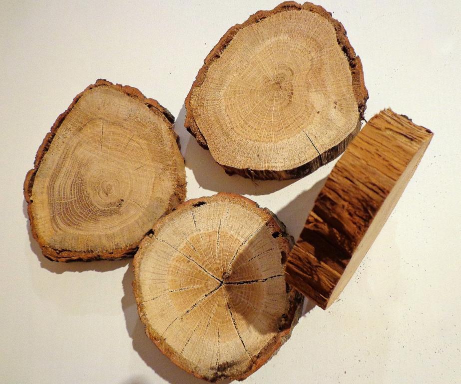 Картинка куска дерева