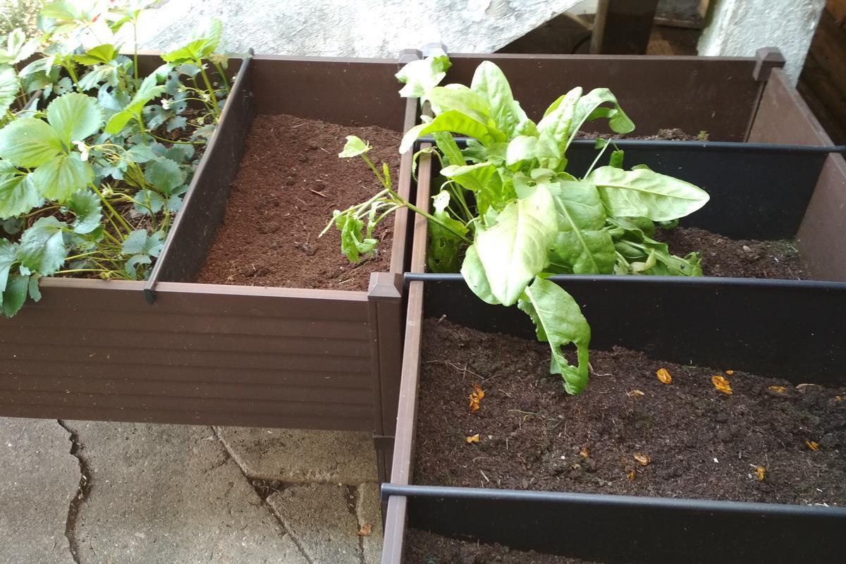 zeleninová záhrada v nádobách