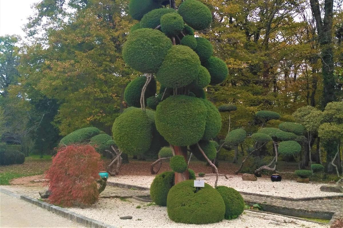 topiary v záhrade