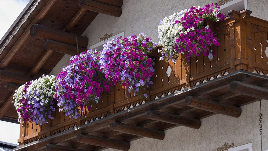 Rośliny Na Północny Balkon Które Będą Się Dobrze