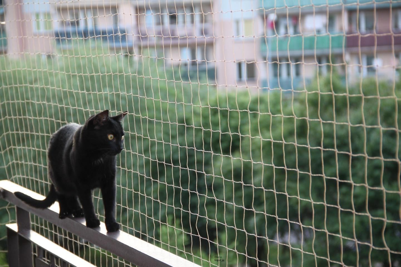 Siatka Ochronna Dla Kota Na Balkon Okno 50 Mm W Wa