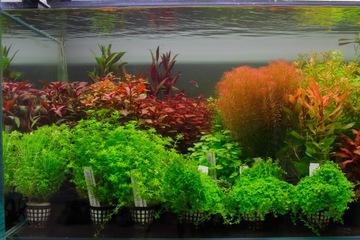 (Подарочный сертификат на покупку и подбор растений для аквариума 200 злотых) доставка товаров из Польши и Allegro на русском