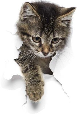 3D NÁLEPKY NA STENU pre deti - mačka 90cm DIZAJNY