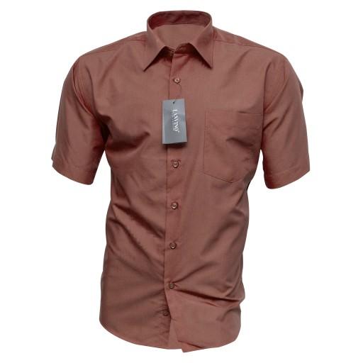 Koszule, Krótki rękaw, Bawełna, Damskie – Odzież i Gadżety